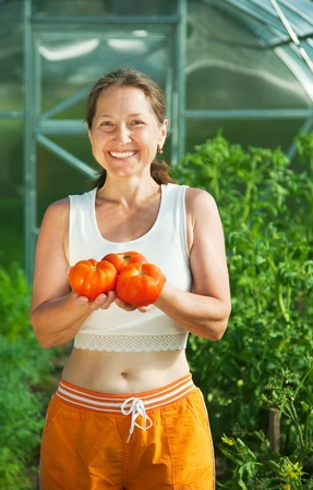 forcing bed: Smiling woman picking tomato in the hothouse