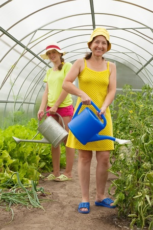 Two women watering vegetables with  watering pot  in hothouse photo
