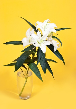 bouquet of white lily in vase over yellow  background Stock Photo - 9428475
