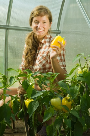forcing bed: young girl is picking  green pepper in the hothouse Stock Photo