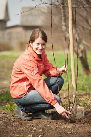 garth: young woman working with shovel in orchard  Stock Photo