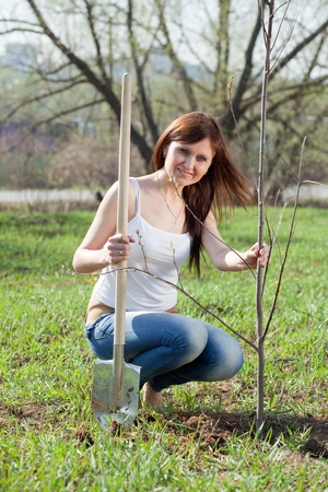 middle age woman planting tree outdoor photo