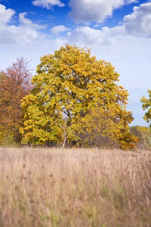 One wonderful autumn tree on  background autumn natures photo