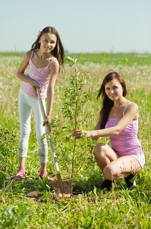 replanting: Mother and her teen girl planting tree