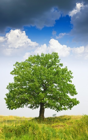 Summer landscape with oak  tree under cloudy sky Stock Photo - 9676177