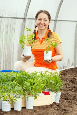 woman planting tomato spouts in greenhouse photo