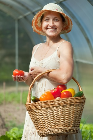 forcing bed: Happy mature woman with vegetables harvest in hothouse Stock Photo