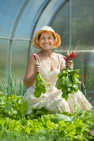 forcing bed: Smiling woman picking radish in greenhouse