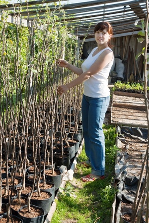 woman with trees seedlings in pots  at hothouse photo