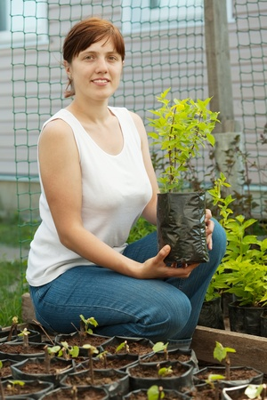 Female gardener with  sprouts in pots  at plant photo