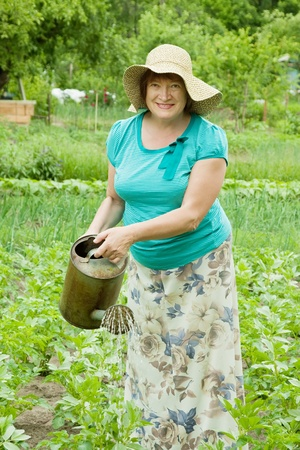 Mature woman watering potato plant with  watering pot photo