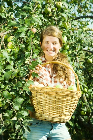 Beautiful young farm girl picking apples from the apple tree  photo