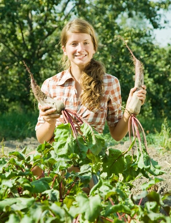 young woman is picking of beet in field photo