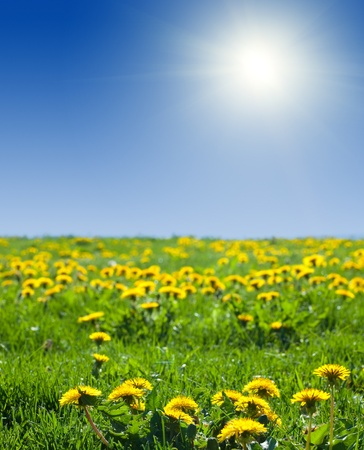 Summer landscape with dandelion meadow in sunny summer day photo