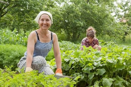 Two women working in her vegetable garden photo