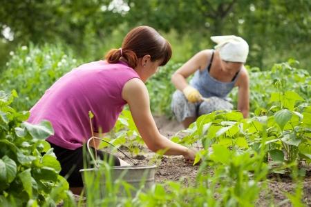 farm worker: Two women working in her vegetable garden