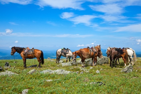 Few saddled horses in mountains   Stock Photo