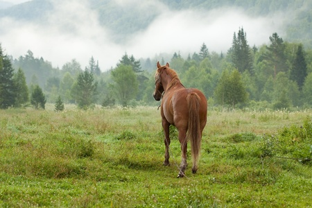 exhalation: horse on  fog meadow in morning Stock Photo