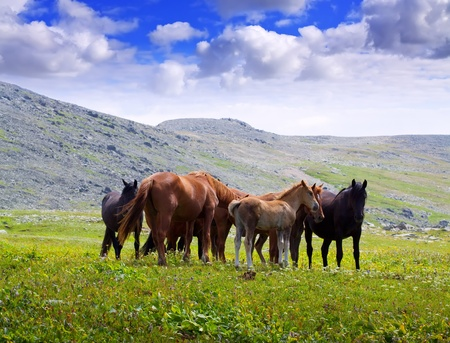 mountains landscape with  herd of horses. Altai, Siberia  photo