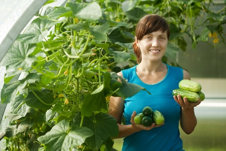 Smiling woman picking cucumber in the hothouse photo
