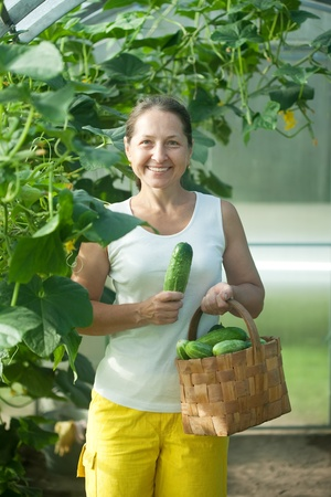 Smiling woman picking cucumbers in  hothouse photo