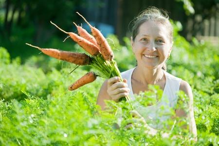 jardineros: Mujer madura recogiendo zanahoria en planta