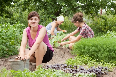 riek: Drie vrouwen die werkzaam zijn in haar moestuin Stockfoto
