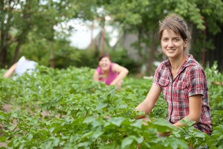 eradication: Three women working in field of potato