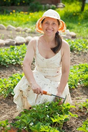 Mature woman prongs strawberry at garden photo