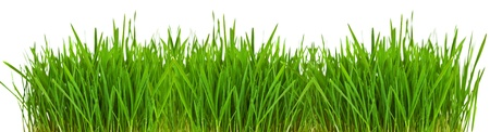 Grass border o ver white with copyspace Stock Photo - 10412307