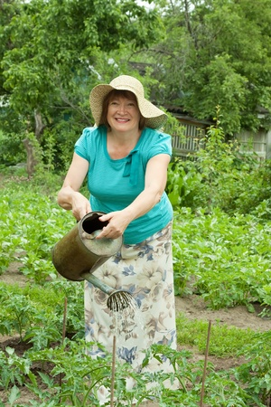 Mature woman watering tomato plant with  watering pot photo