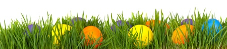 Easter border. Easter eggs in green grass over white background photo