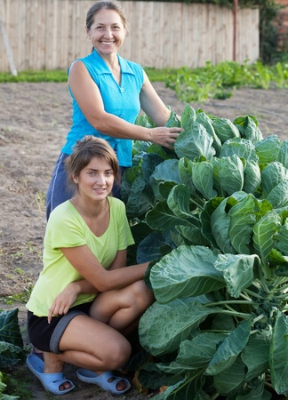 brussels sprouts: Two women in  brussels sprouts plant Stock Photo