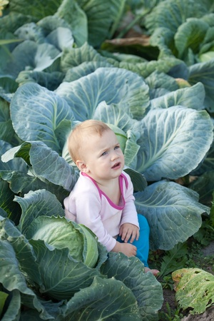 kale:  Baby sitting in  cabbage plant Stock Photo