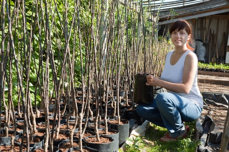 Female gardener with trees seedlings in pots  at hothouse photo