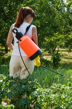 insecticidal: Woman spraying potato plant in field