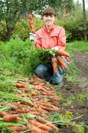 young woman is harvesting carrots in field photo