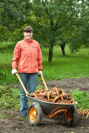 young woman with harvested carrots in field photo
