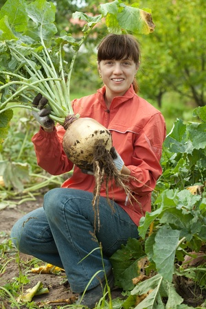 young woman  harvesting beetroot in field photo