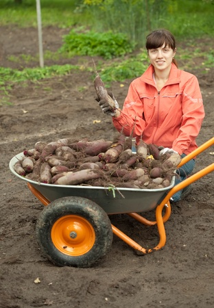 young woman with beetroot harvest in field Stock Photo - 10612707
