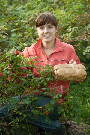 Young woman picking brier in the plant photo