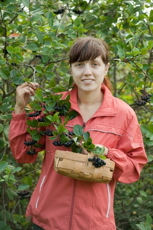 Woman picking chokeberry in plant photo