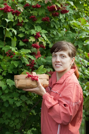 Young woman picking viburnum in the plant photo