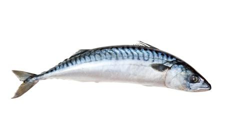 Solo pez caballa fresca. Aislado sobre fondo blanco