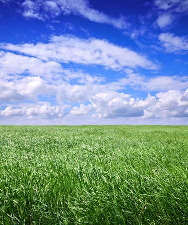 simply summer landscape with green meadow  photo