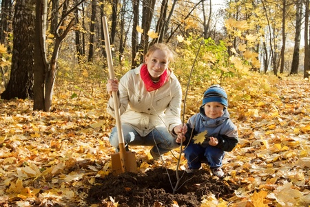 replanting: family planting tree with  spade outdoor in autumn