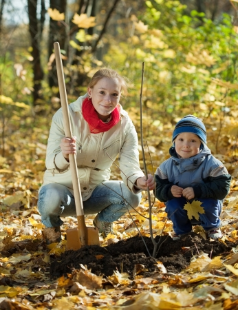 planting season: family planting tree with  spade outdoor in autumn