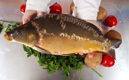 Cook hands with carp fish in kitchen photo