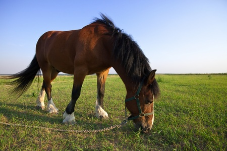 Horse on summer meadow in sunny day photo
