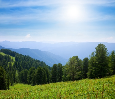 altai: Forest mountains in sunny day, Altai, Siberia